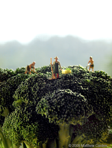 broccoli_crown1