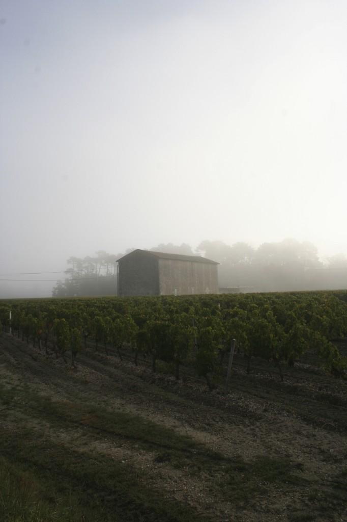 Unterwegs im Bordelaise (2): von Winzerinnen und Weinmachern