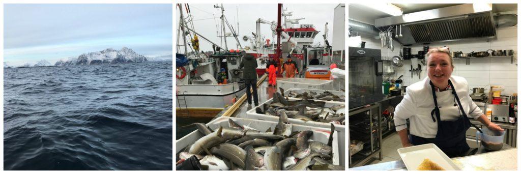 """Skrei angeln auf den Lofoten (2): Skrei """"vom Maul bis zur Schwanzflosse"""" – das Handwerk, die Industrie, die Köche"""