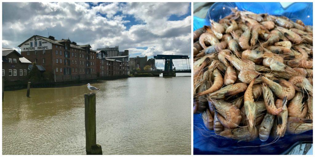 Krabbenkrise, Protestschweine und Wein aus Schleswig-Holstein – mit dem Food Editors Club in Husum