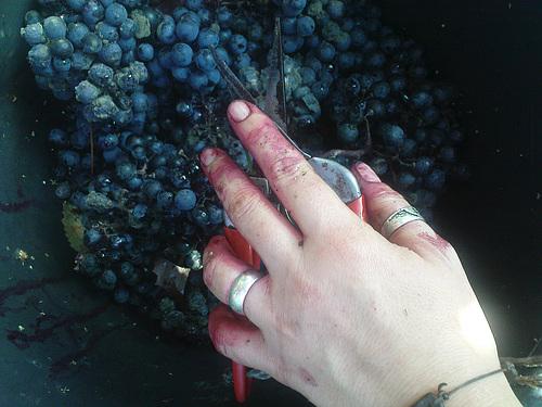 Lu liest Wein