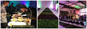 Mikropflanzen und ihre Möglichkeiten: Kresse-Termin mit Menü
